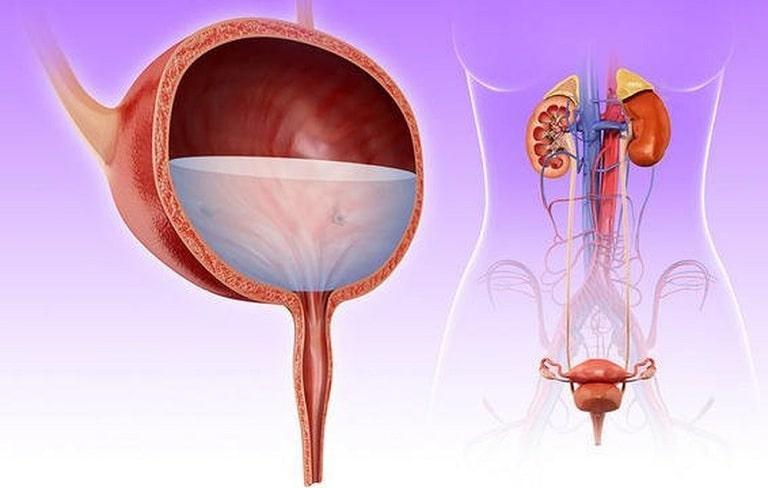 bao dong ti le khang khang sinh o nguoi viem duong tiet nieu 1 - Báo động tình trạng kháng kháng sinh ở người mắc viêm đường tiết niệu