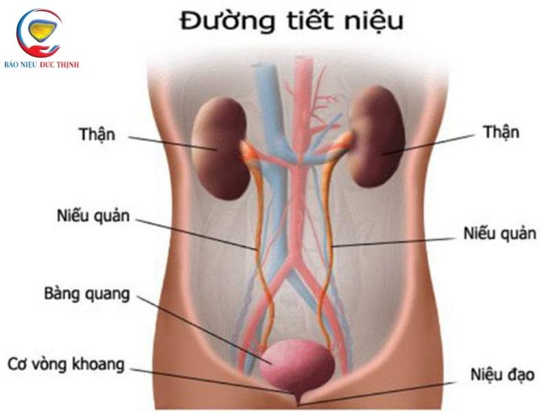 trieu chung viem duong tiet nieu 1 - Triệu chứng viêm đường tiết niệu và cách điều trị hiệu quả
