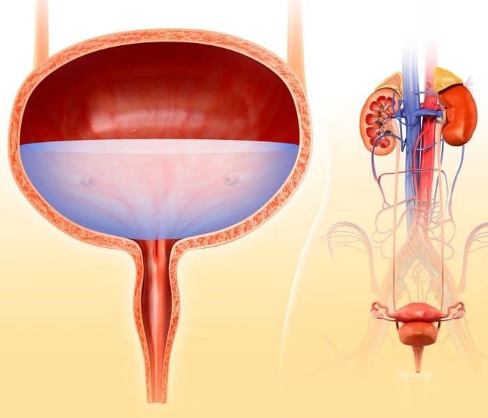 TOP 9 THUOC DIEU TRI VIEM DUONG TIET NIEU O NU GIOI 4 - TOP 9+ thuốc điều trị viêm đường tiết niệu ở nữ giới
