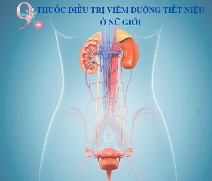 TOP 9 THUOC DIEU TRI VIEM DUONG TIET NIEU O NU GIOI - TOP 9+ thuốc điều trị viêm đường tiết niệu ở nữ giới