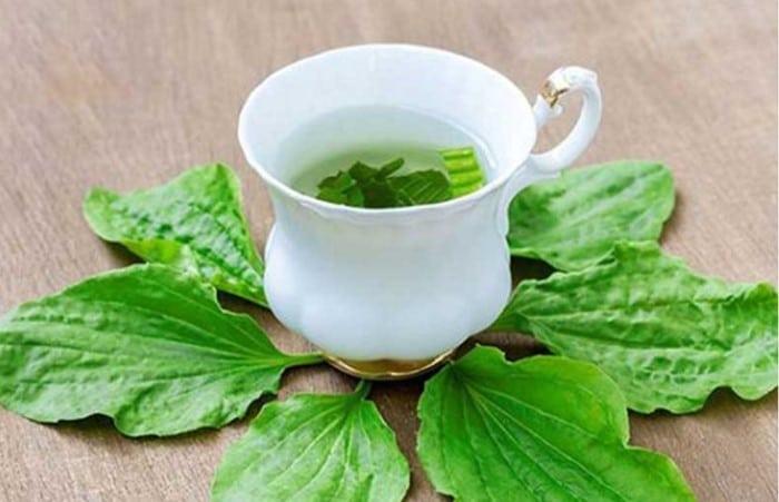 chua viem duong tiet nieu bang cay ma de - Bí quyết giúp chữa viêm tiết niệu bằng cây mã đề