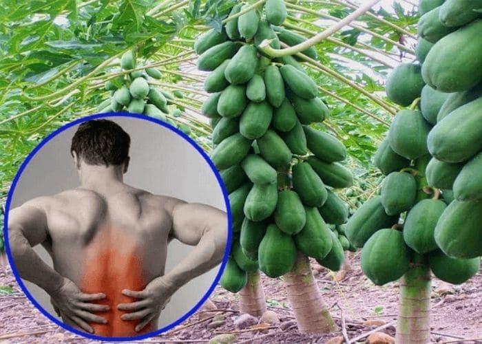 du du tri viem duong tiet nieu bi dau lung - [ GIẢI ĐÁP] Viêm đường tiết niệu bị đau lưng phải làm sao?