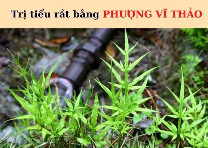 tri tieu rat bang phuong vi thao - Top 7+ Bài thuốc trị tiểu rắt cực hay ngay tại nhà đơn giản