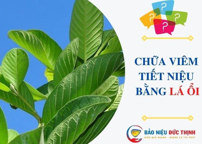 1.chua viem tiet nieu bang la oi - Hướng dẫn cách chữa viêm đường tiết niệu bằng lá ổi đơn giản, hiệu quả