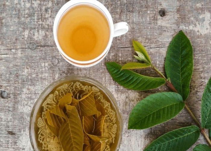 4.chua viem tiet nieu bang la oi kho - Hướng dẫn cách chữa viêm đường tiết niệu bằng lá ổi đơn giản, hiệu quả