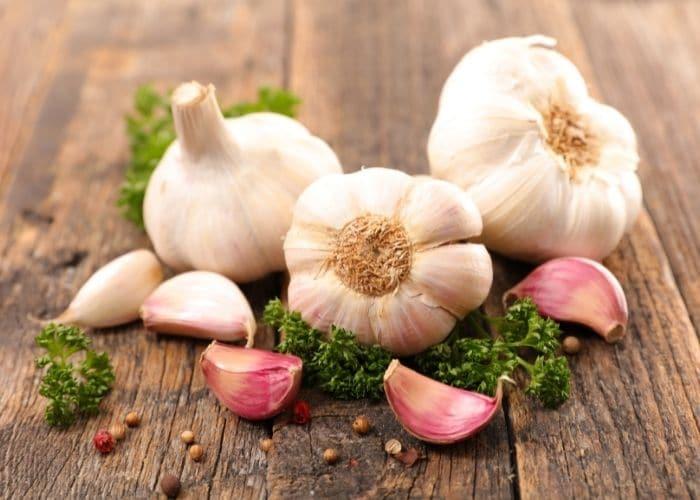 4.chua viem tiet nieu bang toi - TOP 7+ Cách chữa viêm đường tiết niệu bằng thảo dược AN TOÀN, HIỆU QUẢ.