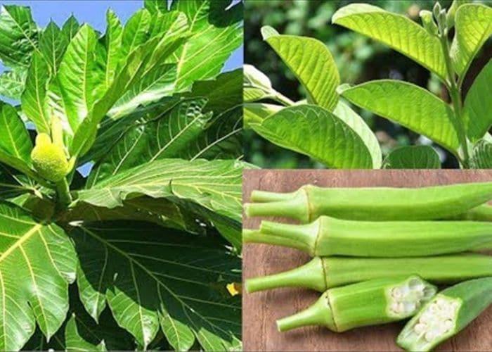 5.chua viem tiet nieu bang la oi dau bap sa ke - Hướng dẫn cách chữa viêm đường tiết niệu bằng lá ổi đơn giản, hiệu quả