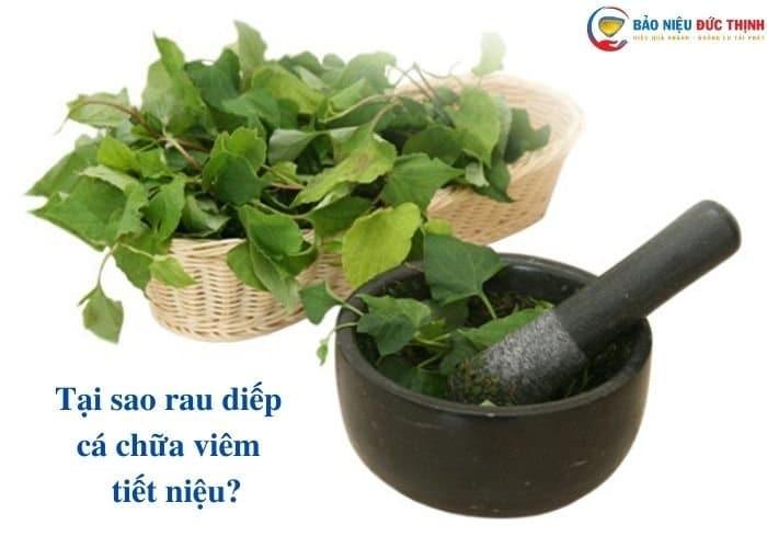 8. bai thuoc dong y diep ca - Top 5 cách dùng rau diếp cá chữa viêm đường tiết niệu hiệu quả bất ngờ