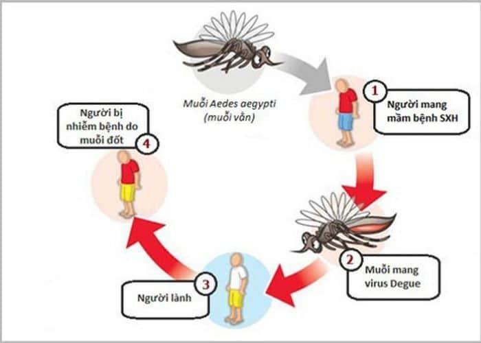 nguyen nhan sot xuat huyet di tieu buot - Hiện tượng sốt xuất huyết đi tiểu buốt gây hại cho sức khỏe người bệnh
