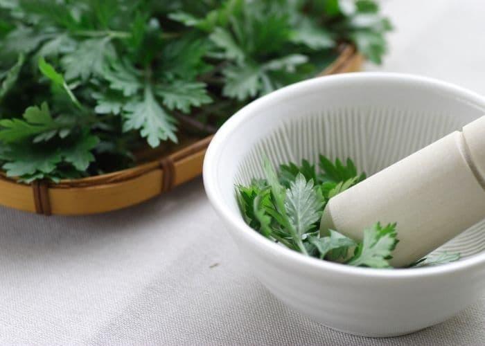 8. chua viem tiet nieu bang dan gian ngai cuu - TỔNG HỢP 5+ Cách chữa viêm đường tiết niệu bằng dân gian hiệu quả, an toàn