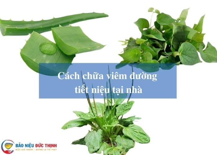 chua viem duong tiet nieu tai nha - [HƯỚNG DẪN] 10+ Cách chữa viêm đường tiết niệu tại nhà nhanh khỏi nhất hiện nay