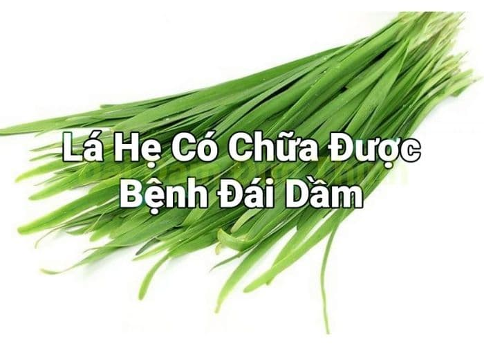 la he chua benh dai dam - Mách ba mẹ cách chữa đái dầm bằng lá hẹ cực kỳ hiệu quả